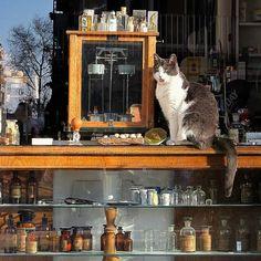 Cat at pharmacy...