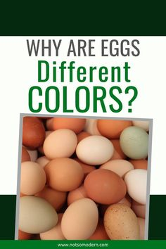 Have you every wondered why chicken eggs are different colors? Learn more about the different breeds that lay uniquely colored eggs and how they get their pigment. Chicken Lady, Chicken Feed, Fresh Chicken, Chicken Eggs, Backyard Poultry, Chickens Backyard, Chicken Egg Colors, Colored Eggs, Laying Hens
