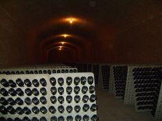 Freixenet wine cellar in Querétaro