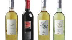 Sauvignon, Sardinia, Bottle, Alcohol, Pretty, White People, Flask, Jars