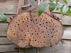 solitary bee home, made from a tree chunk drilled with holes