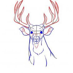 how to draw a realistic deer step 4