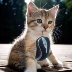 Mom I caught a mouse