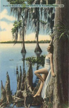 Bathing Beauty Cypress Gardens Florida Vintage Postcard.