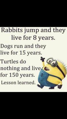 Turtles.....