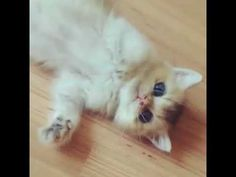 Funny Cat Videos, Funny Cats, Cute Cat Gif, Facebook, Youtube, Shop, Animals, Instagram, Animales