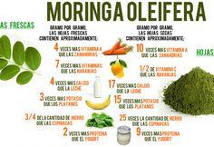 Al igual que el té verde, la Moringa tiene decenas de beneficios para nuestro organismo, desde la reducción del Colesterol, hasta la lucha contra infecciones y la hipertensión, aprende más aquí.