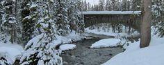 Winter Wonderland Tour (Yellowstone Park)- Adventures by Disney