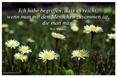 Mein Papa sagt...  Ich habe begriffen, dass es reicht, wenn man mit den Menschen zusammen ist, die man mag.  Walt Whitman   #Zitate #deutsch #quotes      Weisheiten und Zitate TÄGLICH NEU auf www.MeinPapasagt.de