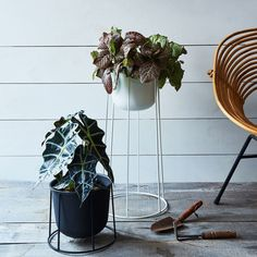 Sweeten the (plant) pot. Sometimes, all it takes to add a little pep to your plants is a new home. These simple, modular wire plant stands come in short, medium, and tall versions perfect for creating instant visual interest (and to keep plants far from little hands and paws). #wire #planter #food52 #giftguide