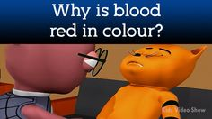 Human Blood System- Why Is Blood Red In Color? | What is Blood?