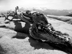 ansel adams photos | chose two forest images with a range from very light to very dark ...