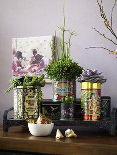 Sukkulenten sehen aus wie kleine Kunstwerke und liegen voll im Trend. Wir haben ein paar DIY-Deko-Ideen für diese exotischen Pflanzen.