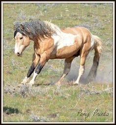 Name unknown Cute Horses, Pretty Horses, Most Beautiful Horses, Animals Beautiful, Horse Markings, Horse Saddles, Western Saddles, Appaloosa Horses, Wild Mustangs