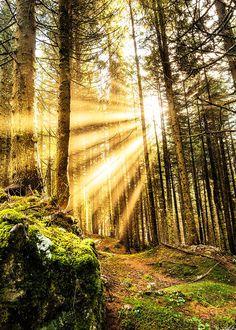 Sunbeams, Herbst, Germany photo via thewell