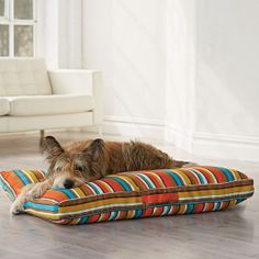 Round Dog Bed | The Company Store