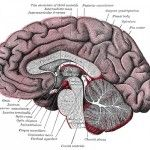 Very interesting article showing some promise to managing autism symptoms...   Children With Autism Have Extra Synapses In Their Brains	   Children With Autism Have Extra Synapses In Their Brains Autism Spectrum Disorder (ASD) affects about 1 in 68 children born in the United States. In an effort to find out why, a group of researchers led by David Sulzer at Columbia University Medical Center examined the synapses in the brains of children...