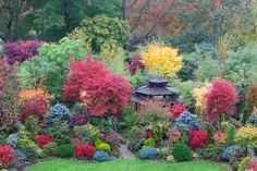 Beautiful acer colours of autumn - Very well placed garden! Beautiful Flowers Garden, Beautiful Gardens, Acer Garden, September Colors, Virginia Creeper, Late Autumn, Autumn Garden, Stunningly Beautiful, Fall Photos