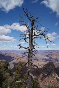 East Rim Drive, Grand Canyon National Park