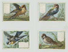 Cards depicting birds