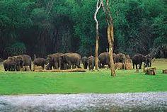 Elephants in Thekaddy