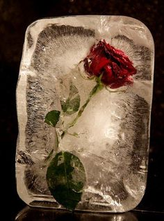 The moment of triumph; the sigh of despair. Nothing lasts forever - not even this. A Level Photography, Still Life Photography, Macro Photography, Photography Composition, Flower Photography, Belle Image Nature, Frozen Rose, Frozen Art, Frozen In Time