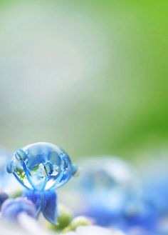 blue, water drop