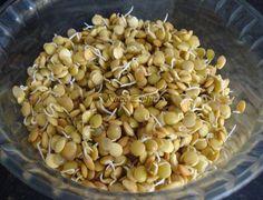 Salada com brotos de lentilhas – crudivorismo » NacoZinha - Blog de culinária, gastronomia e flores - Gina