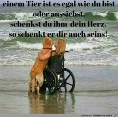 '- Eine von File & # 10 beautiful sayings and wisdom from …. & # – One of 14087 files in the category & # sayings & # on FUNPOT. Comment: 10 beautiful sayings and wisdom from … Animals And Pets, Funny Animals, Cute Animals, Sad Pictures, Funny Photos, I Love Dogs, Cute Dogs, Dog Quotes, True Quotes