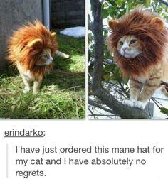 cat mane