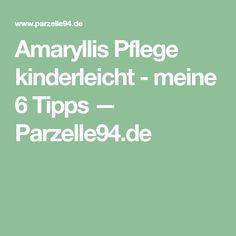 Amaryllis Pflege kinderleicht - meine 6 Tipps — Parzelle94.de