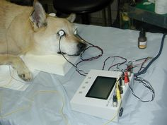 網膜電図検査
