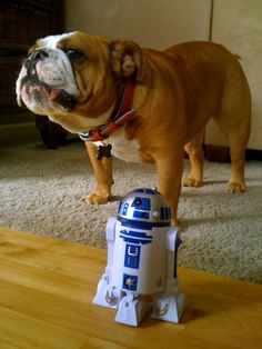 May the 4th be With You | BaggyBulldogs
