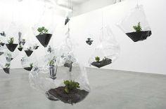 phendi:  MIKALA DWYERHanging Garden, 2008money plants, plastic and earth