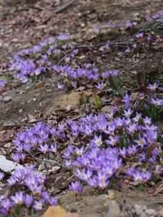 【2015年3月下旬】コピスガーデンお庭の様子です。