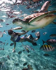 Scuba diving in Ranguana Caye, Belize Belize Island Travel Destinations Honeymoon Backpack Vacation Underwater Photography, Travel Photography, Nature Photography, Images Esthétiques, Hawaii Life, Beautiful Places To Travel, Travel Aesthetic, Travel Goals, Dream Vacations