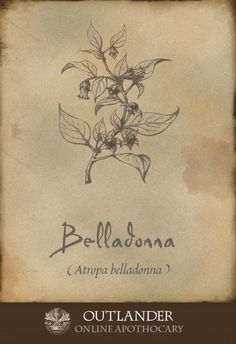 Belladonna. A highly toxic plant used in 1743 to relieve muscle spasms and excessive sweating. Also known as Deadly Nightshade and Banewort, it could only be administered by a trained professional. #Outlander #ApothecaryCabinet http://www.wartalooza.com/treatments/trichloroacetic-acid