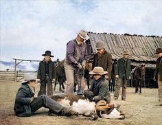 THE COWBOYS - John Wayne brands a calf with the assistance of his young crew of cowboys - Directed by Mark Rydell - Warner Bros.The Cowboys- John Wayne