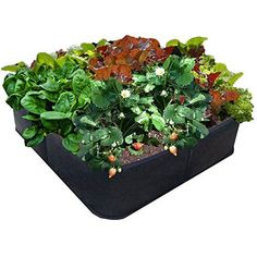 Victory 8 Fabric Raised Garden Bed 2x2 Feet -- See this great product.