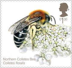 Bees £1.00 Stamp (2015)  Northern Colletes Bee (Colletes floralis)