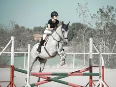 Mis impresiones al volver a la competición Horse Pictures, Great Pictures, The Dreamers, Lovers, Horses, Animals, Show Jumping, Great Legs, New Adventures
