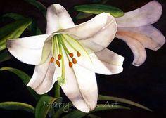 Flowers | Mary Gibbs Art D Flowers, White Flowers, Watercolor Flowers, Watercolor Paintings, Watercolours, Easy Paintings, Flower Paintings, Watercolor Projects, Z Arts