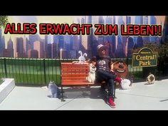 UNIVERSAL STUDIOS wir KOMMEN! | ChrisCross - YouTube Universal Studios, Central Park, Hollywood, Youtube, Life, Youtubers, Youtube Movies