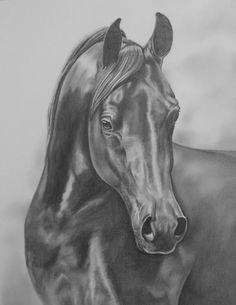 Equine Fine Art: Pencil, Charcoal & Pastel Horse Drawings (Dunway Enterprises) Arabian Horse 11 X 14 Print of an Original Pencil Drawing