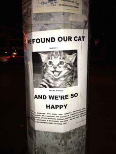 And the day when Mr. Mittens got found. | The 35 Happiest Moments In Animal History