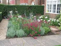 Using a colourful planting design makes for a welcoming front garden that gives pleasure every time someone walks to the front door! Plant Design, Acre, Grass, Leaves, Outdoor Structures, Planting, Garden Ideas, Lavender, Gardens