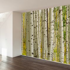 Birch Forest Wall Mural Decal - WallsNeedLove