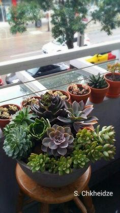 My new succulent bowl. . It is so photogenic that I can't stop taking photos