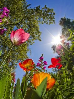 Bug's eye view Flowers Garden Love
