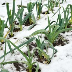 Follow these tips to keep your plants growing all through winter.